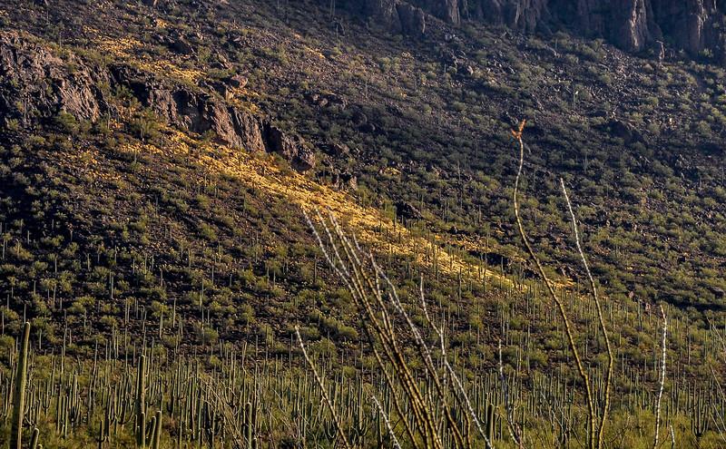 Panther Peak Work Site 12-16-12