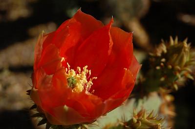 2008, Spring at the Desert Botanical Garden