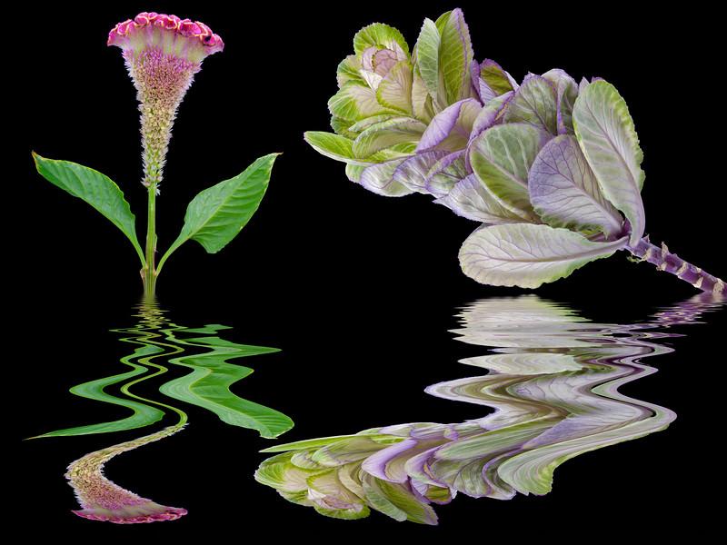 094-Flowering Kale & Bromalaid Flood.JPG