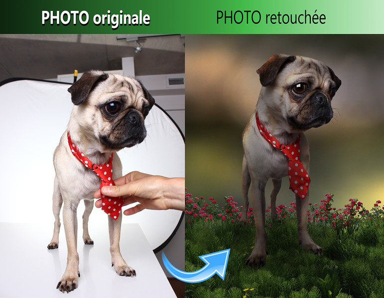 pug-retouched.jpg