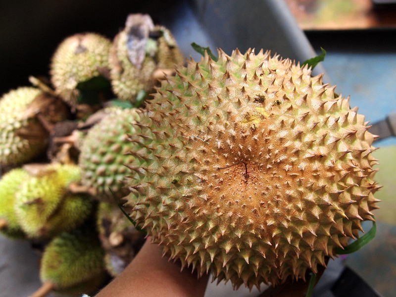 Hawaii-Maui-Durian.jpg