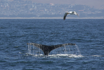 Whales / Dolphins