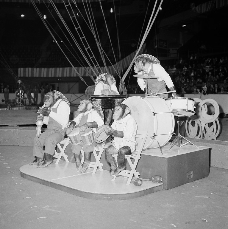 . Ringling Brothers, Barnum and Bailey Circus are going through their entertaining, amusing, and sometimes hair-raising stunts, as a band of performing chimpanzees sound off in Madison Square Garden in New York on March 30, 1959. (AP Photo/Harvey Lippman)