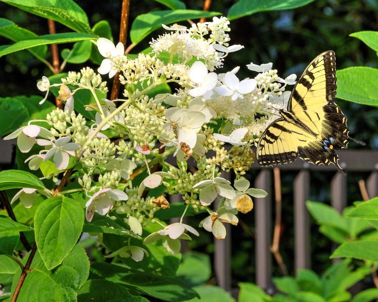 Garden 1, 247.jpg
