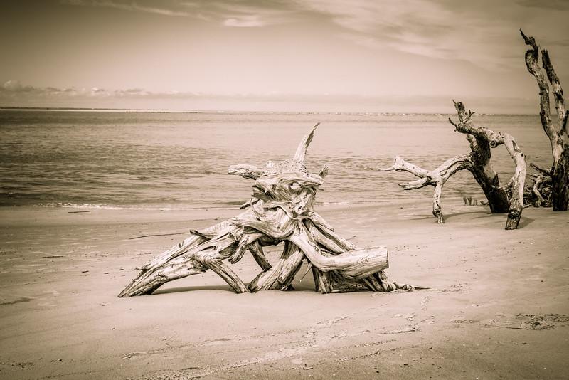 Driftwood I.jpg