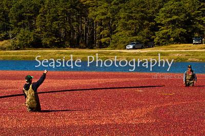 Cape Cod Cranberry Grower's Harvest Festival 2009