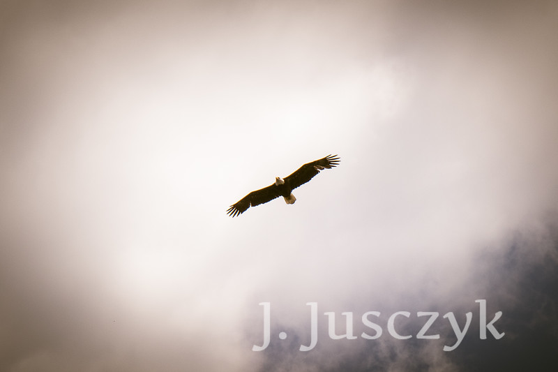 Jusczyk2021-6835.jpg