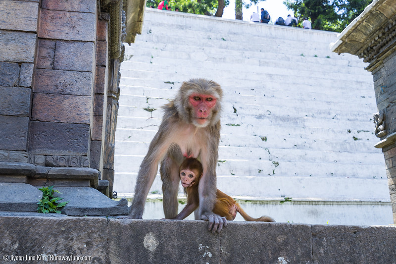 Kathmandu-4488.jpg