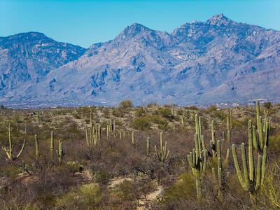 Saguaro NP East - 2013