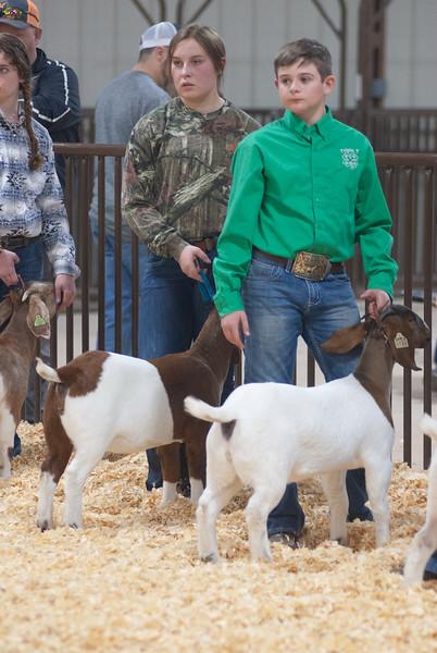 kay_county_showdown_goats_20191207-155.jpg