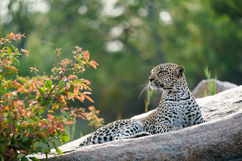 LeopardHills-20171024-1829.jpg