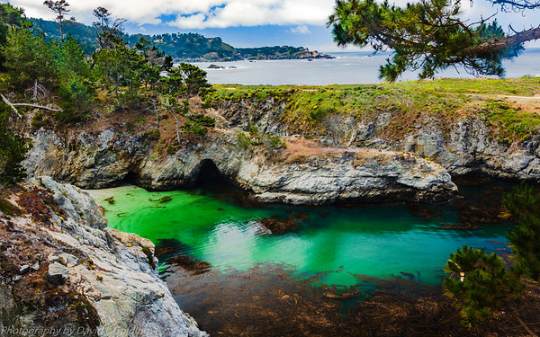 Point Lobos State Reserve (CA) Collection