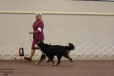 Veteran Dog 9-11 yrs