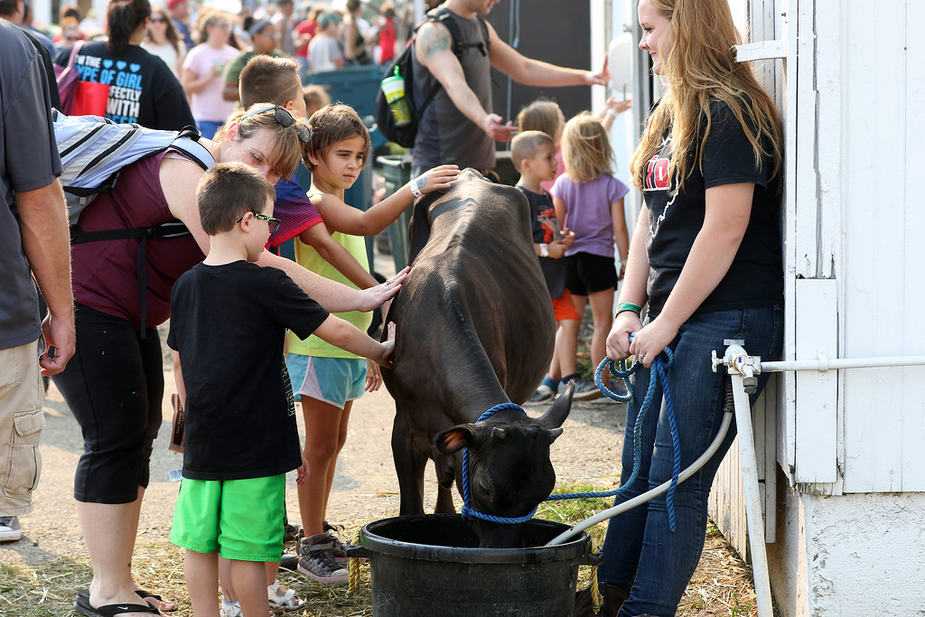 . Troy Township resident Grace Kimpton, right, smiles as a family gets to know Moo-Moo, her neighbors� Jersey dairy cow, at the 2017 Great Geauga County Fair. This year\'s fair runs from Aug. 30 through Sept. 3. For more information, visit www.geaugafair.com. (News-Herald file)