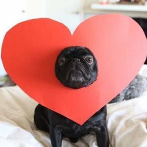 My Pugs :)