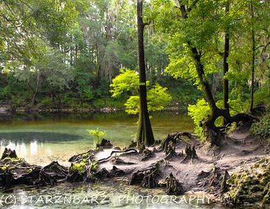 2021 N. Florida Wander
