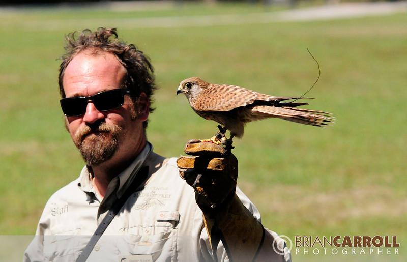 MMG Birds_of_Prey_2012_2.jpg