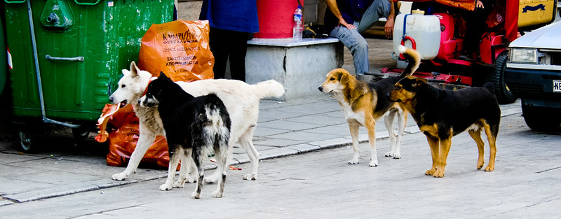 Stray dogs of Thessaloniki, Greece