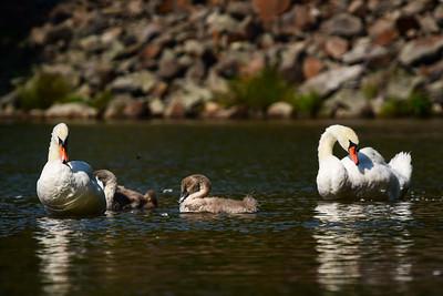 Monksville Reservoir Kayaking 08-29-2018
