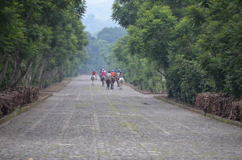 Horseback riding excursions on the grounds at Finca Filadelfia