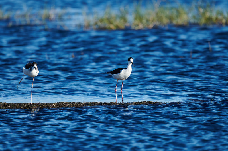 20181103 - Brazoria Wildlife Refuge-85B_4097.jpg
