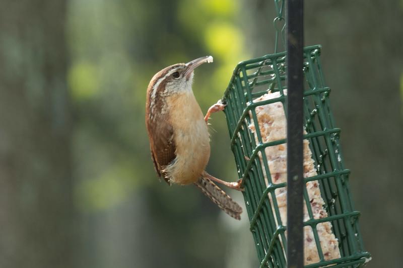 birdfeeder-7184.jpg