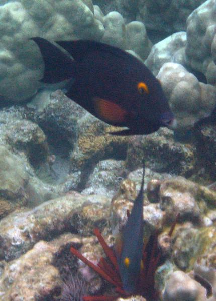 529- 20080416- Hawaii 20-Snorkelling IMG_0798.jpg