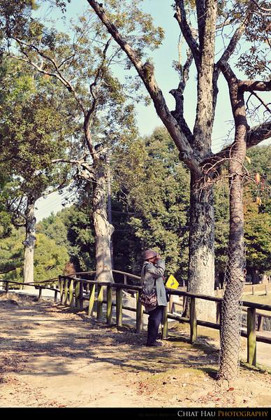 we are now on our way to...Kasuga Taisha Shrine