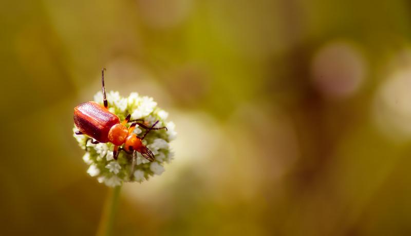 Bugs and Beetles - 145.jpg