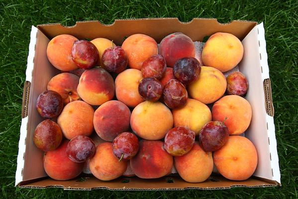2015 Palisade Peach Festival