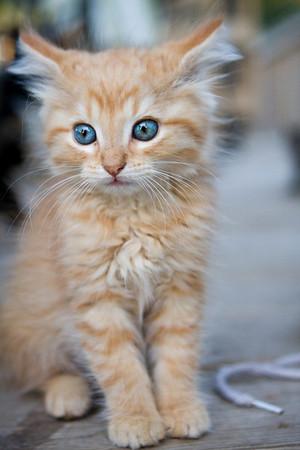 CATS: Buy Prints