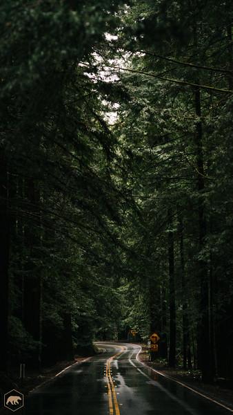 Forrest-Road.jpg