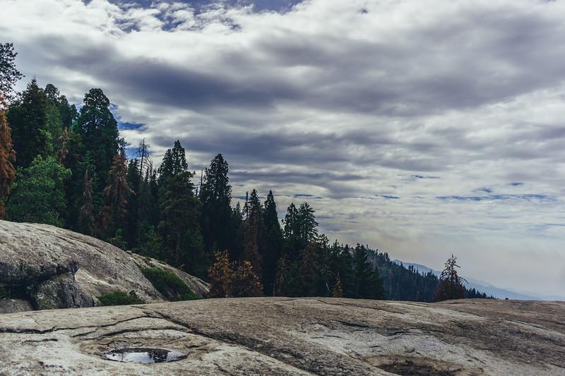 Rui in Sequoia-07023.jpg