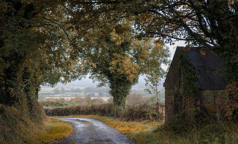 Slieve Bloom Autumn 2.jpg