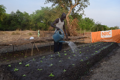 Aid assistance in market gardening