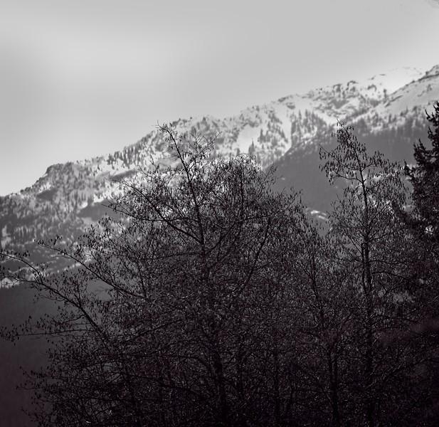 mountain range with tree