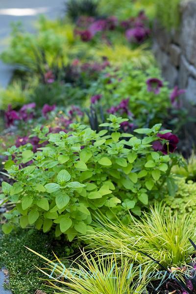 The Chartreuse Garden_1022.jpg