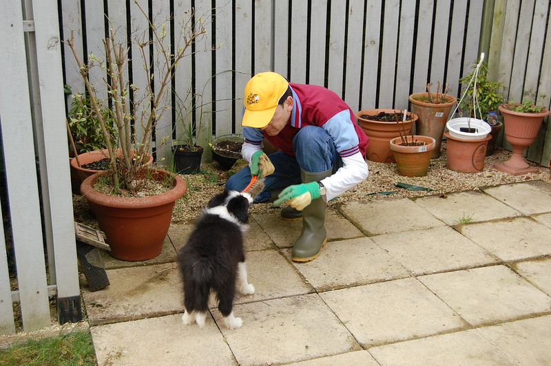 Gardening with Darwin (2).JPG