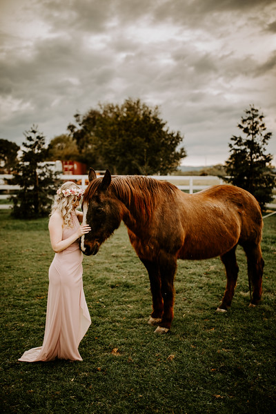 horsey-22.jpg