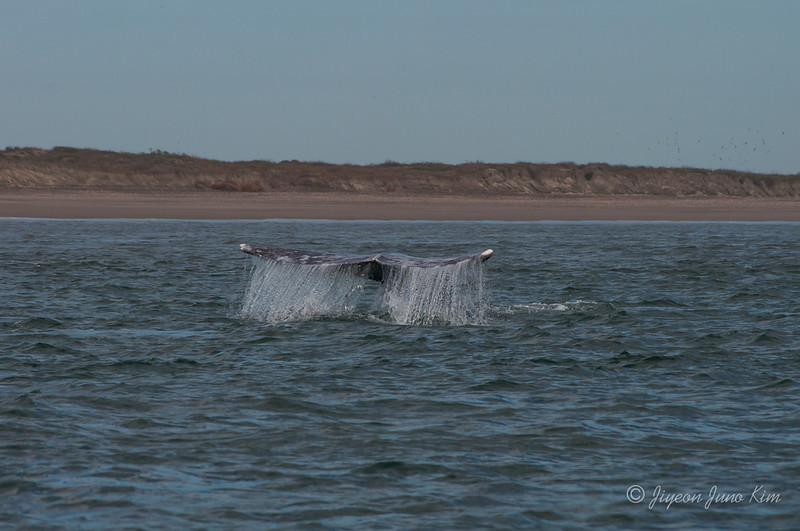 Mexico-Loreto-Whale-2276.jpg