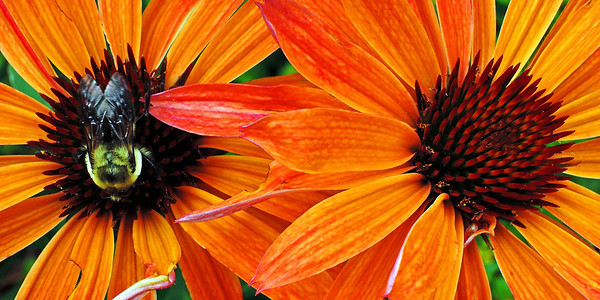 Flowers, Bees, & Butterflies