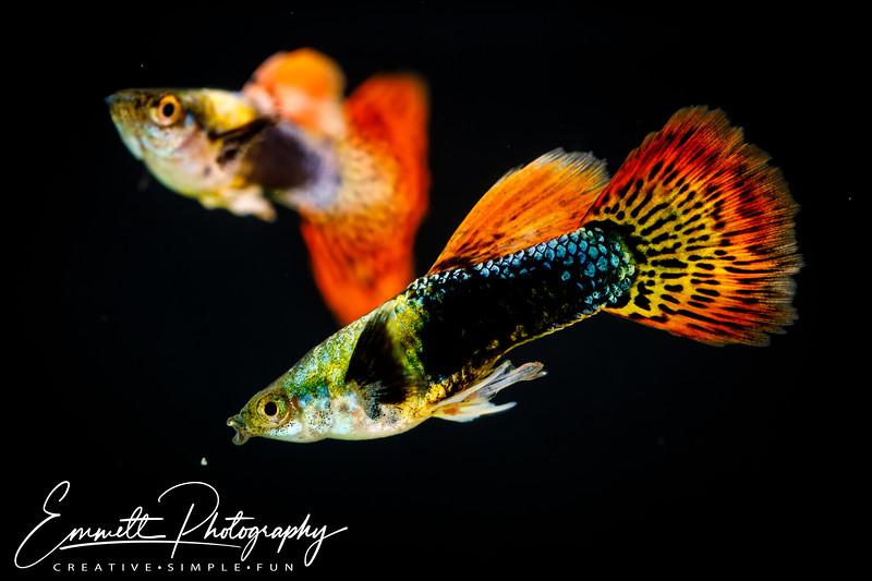 20200208-Fish-5.jpg
