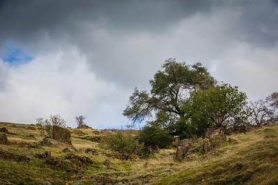 California Foothills