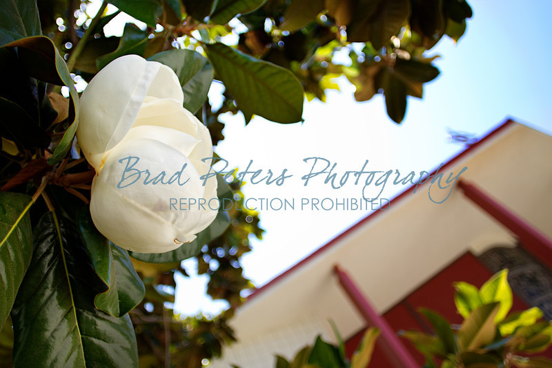 Brad Peters Photography