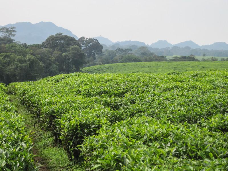 Rwanda_17_ixus-9311.jpg