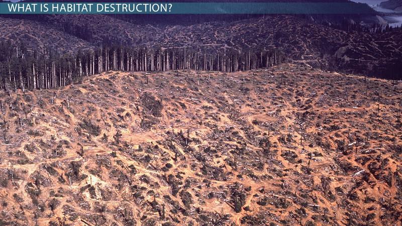 what-is-habitat-destruction-effects-definition-causes_01004201_110761.jpg