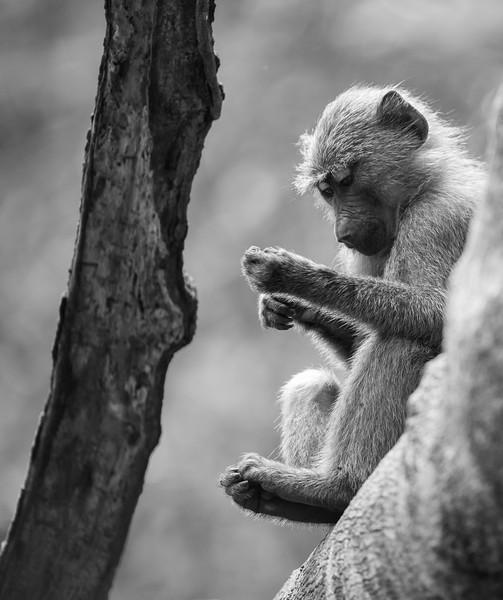 Uganda_T_Chimps-1511.jpg