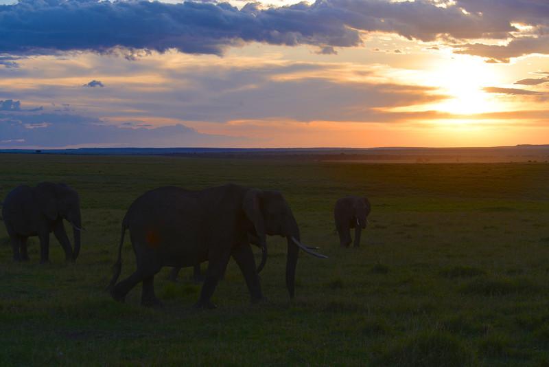 East Africa Safari 180.jpg