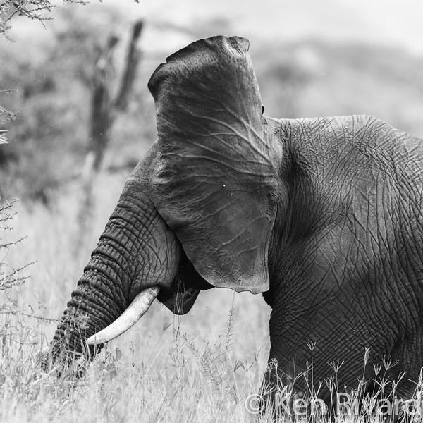Tanzania_wm_web_1100-4600.jpg