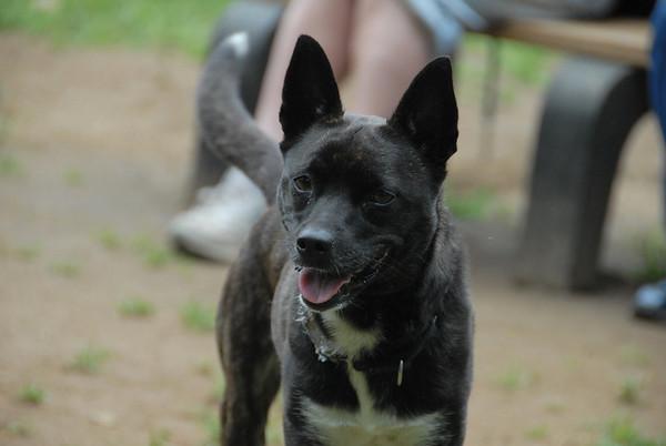 2011-06-12 Central Dog Park